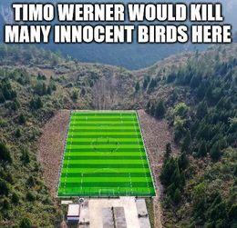 Birds memes